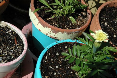 painted pots 2