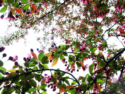 flowertrees 010