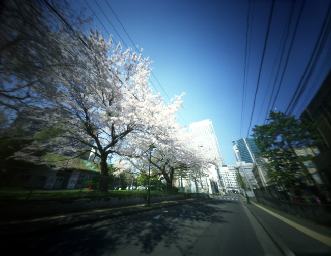 "WPPD Cherry Blossoms and ""(New) The Westin Sendai"""