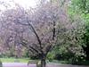 IMG_2918 (shame00) Tags: cadogangardens may2010 may12010