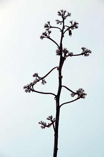 twig-tree