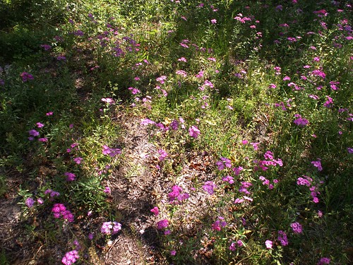 100502-pinkflowerbunch2-altered