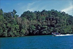 60054237 (wolfgangkaehler) Tags: trees tree tourism latinamerica southamerica forest boats boat rainforest scenery guatemala riodulce forests centralamerica tourboat tourboats rainforests excursionboats excursionboat