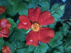 After May Rain 7