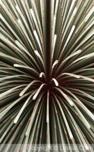 2010世博英國館-0012