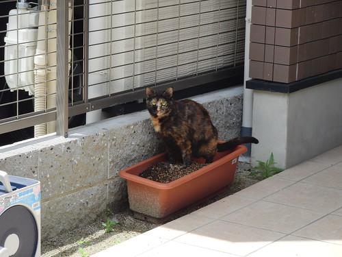 Today's Cat@2010-05-16