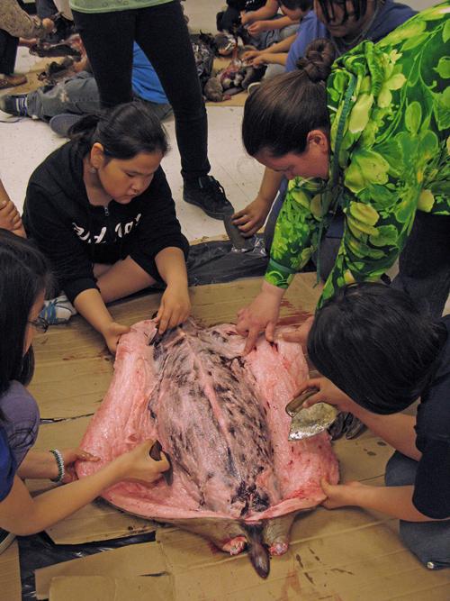 kids skin a seal, Bethel, Alaska