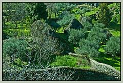 Entrada de Monsanto (geoorgesf) Tags: portugal temple village medieval castelo legend middleages castillo roca templar monsanto templarios lenda leyenda aldea enunlugardeflickr llegenda naturtejo distritodecastelobranco aldeahistórica mourasencantadas concelhodeidanhaanova monsantodabeira castelodemonsanto laordendeltemple regióndelcentro subregióndabeirainteriorsul antigaprovinciabairabaixa castillodemonsanto castleofmonsanto inseberg inselberggraníticodemonsanto monteislagraníticademonsanto monteisla geositio geoparquenaturtejodamesetameridional aldearoquera puebloroquero