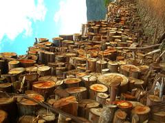 888oooo... (...anna christina...) Tags: brazil minasgerais nature brasil natureza serradamantiqueira mataatlntica annachristina annachristinaoliveira