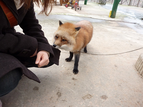 fox18