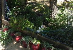 White garden area.