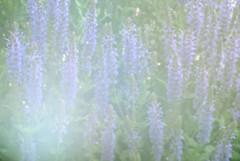 143.365 (erin.alyssa.) Tags: flowers light house nikon purple days flowerbed 365 sooc d3000