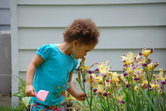 Gigi's Irises
