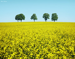 Brothers (Ben Heine) Tags: camera family famille flowers trees light summer sky art love nature colors field yellow compo