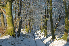 Penderry Woods in the Winter