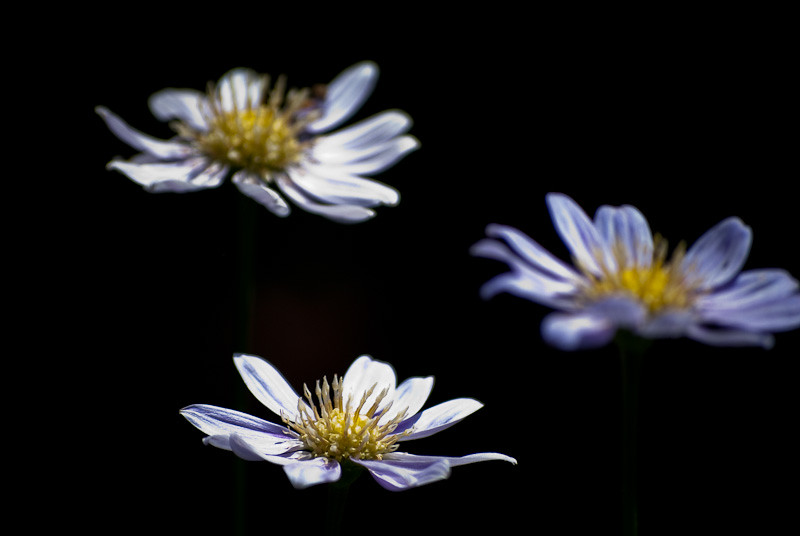 Himonya_park_flowers_8530