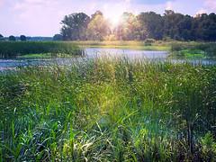 Light on the Marsh (h_roach) Tags: grass southcarolina swamp marsh smrgsbord anawesomeshot nawesomeshot huntingstatepark