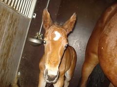 Foal (Bubblejewel96) Tags: horse foal