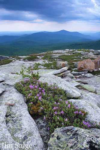 View to Kearsarge Over Small Rhodora Patch