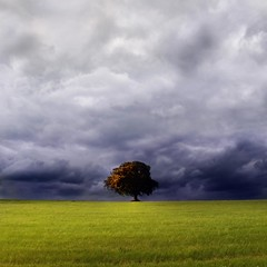 """The Lime Tree"" (helmet13) Tags: sky storm tree nature clouds raw harmony horizont singletree greenmeadow limetree d90 100faves peaceaward world100f"