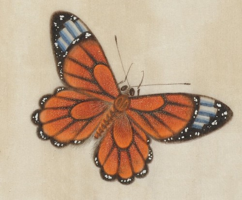 Butterfly Album a (detail)