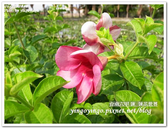 蓮花世界R0012583