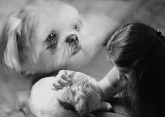 "158-365 ""We have a guest"" (Abigail Harenberg) Tags: woman dog pet selfportrait me animal project myself lens nikon shihtzu domestic friendly guest 8514 project365 365days d700 portraitshots 365days2010"