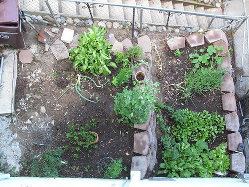 vegetable garden, mid June 2010