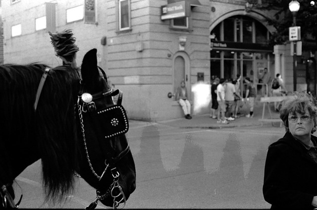 121.365: Horse