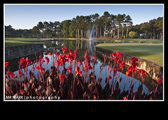Canna's on the Green, Atlanta Athletic Club, Johns Creek, GA (MR MARK | photography) Tags: red orange lake green water fountain ga golf georgia pond lily greens link lillies fairway canna cannas johnscreek atlantaathleticclub