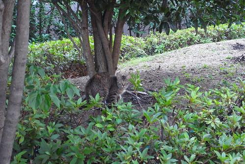 Today's Cat@2010-06-17