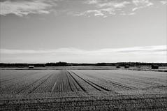 (Mann-ist-0) Tags: blackandwhite bw field finland countryside kurikka niksilverefexpro reinikanneva