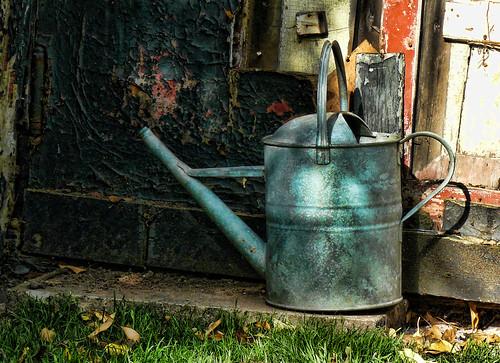 Risparmiare acqua in giardino