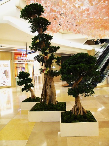 IMG_0076 Ion Orchard , Singapore