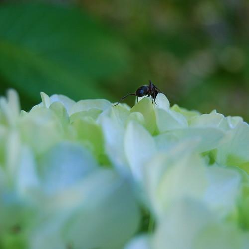 178/365 Ant