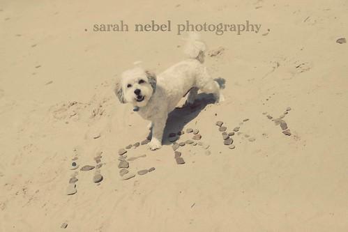 . herky is a big fan of the beach .