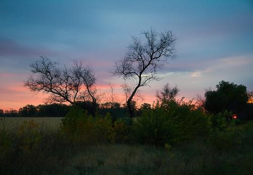 Рассвет  с деревом в главной роли