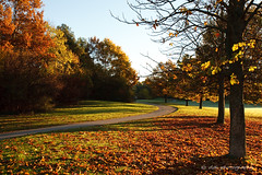 深秋之晨 late autumn morning