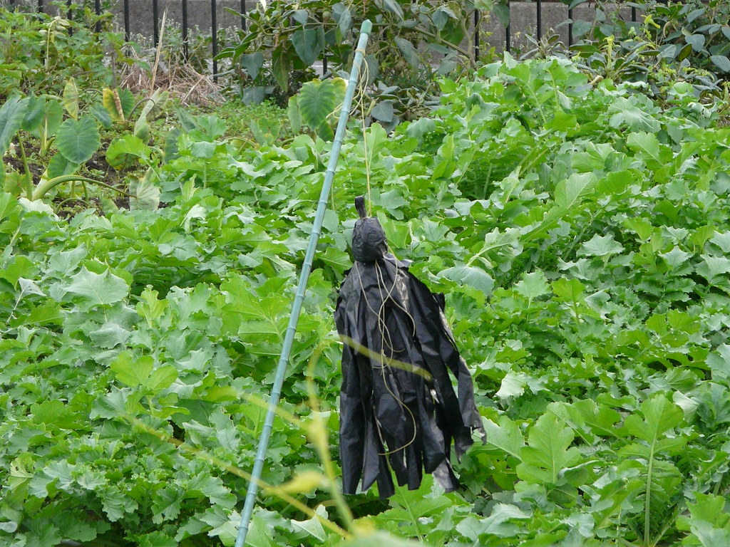 Crow TeruTeruBozu Scarecrow