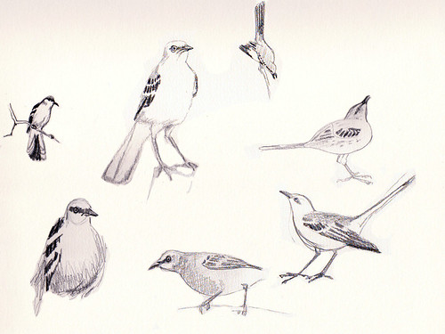 mockingbird sketches
