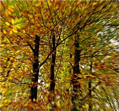 autumn illusions (Ev@ ;-)) Tags: wood autumn trees italy motion leaves latina cori lazio artimage samsungdigitalcamera fontanadelprato samsungnx10