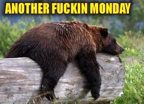 monday-bear
