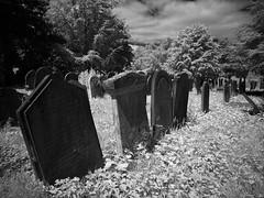 york cemetery (Johnson Cameraface) Tags: 2017 july summer olympus omde1 em1 micro43 mzuiko 1240mm f28 johnsoncameraface yorkcemetery yorkshire york northyorkshire cemetery ir infrared blackandwhite monochrome
