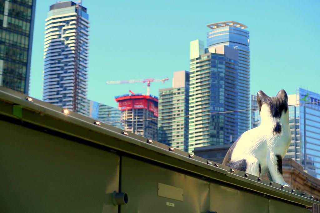 Best Dog Park Downtown Toronto