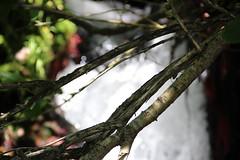Beach-side hidden waterfall, Netarts Bay OR (nikname) Tags: oceansidebeach oceanside netartsbayoregon oregonbeaches beach oregonwaterfalls waterfalls
