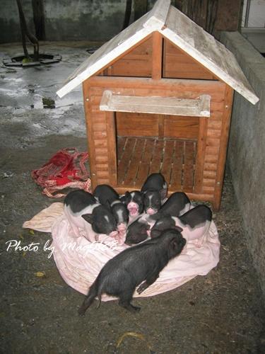 2009 12 20_15宜農牧場.JPG