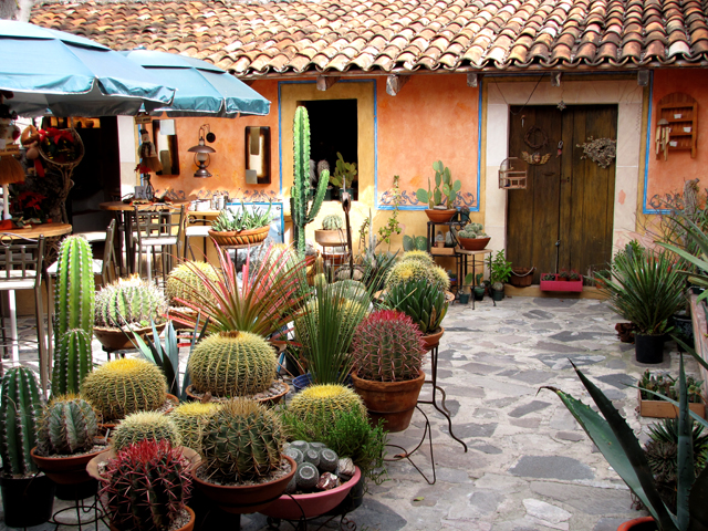 Cactus Shop & Restaurant