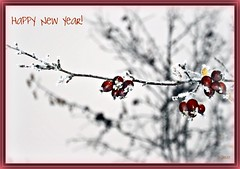 Wishing you joyful abundance and much success in 2010! (Sheree (Here intermittently)) Tags: snow nature fruit canon photography frost branch edmonton dof bokeh alberta twig happynewyear crabapples 2010 instructor reachingout canonlenses canon50d shereezielke coveredwithsnow frostedfruit albertaphotographer edmontonphotographer marthasvine copyrightshereezielke