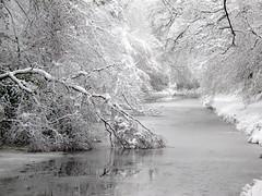 Broken Branches (John Spooner) Tags: winter snow cold ice canon frozen branch winterwonderland g11 basingstokecanal uksnow canonpowershotg11