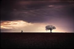 The Great Adventure (Midnight - Digital) Tags: lighting tree bike bicycle clouds kid mood child horizon memories atmosphere adventure 80s imagination dd cinematic past goonies